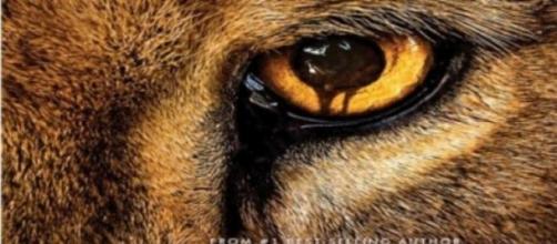 Zoo la nueva serie de Mediaset