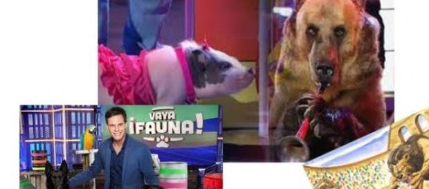 Vaya Fauna, programa que roza el maltrato animal