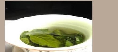 sustancia de té verde ayuda en reparación del ADN