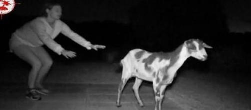 Ni las cabras soportan 'Pasaporte a la isla'