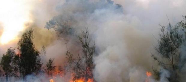 El fuego forestal arrasa con todo