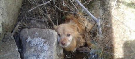 Cão no local que estava preso e foi hoje salvo