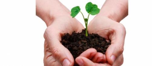 FGV oferece cursos gratuitos de sustentabilidade