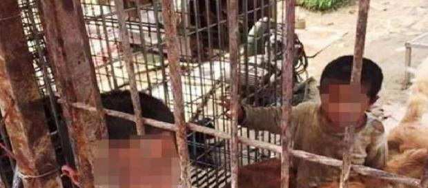 Doi copii sunt crescuți într-o cușcă cu animale