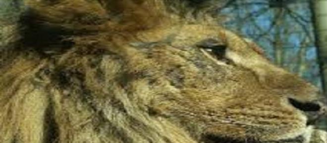 Descartando la responsabilidad de un ciudadano español, se conoció la identidad del cazador que pagó 50.000 euros por acabar con la vida de Cecil, el león más grande y famoso de Zimbawe. Fue un dentista norteamericano llamado Walter James Parker.
