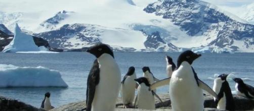Where do the penguins go?