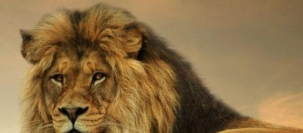 Morte de leão causa revolta na internet