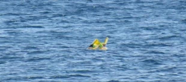 și-au uitat fetița în apa mării pe un colac