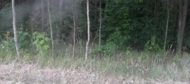 Las na Mazowszu zagrożony suszą