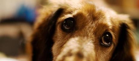 O cão espera pelo seu dono à porta do hospital