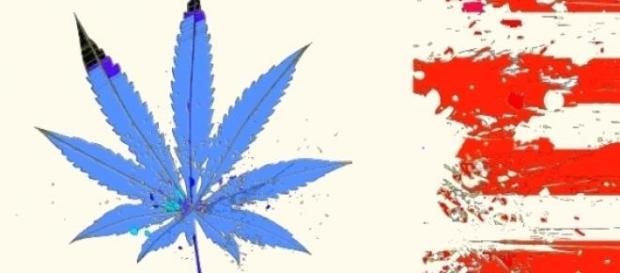 Colorado legalizuje marihuanę