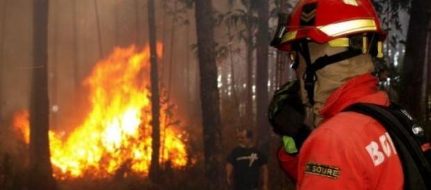 Chamas mobilizam 650 bombeiros