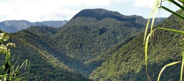 Parque Nacional Braulio Carrillo, Costa Rica