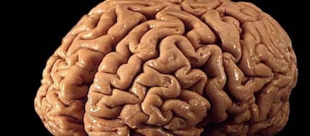 Un circuito cerebral posible origen del lenguaje