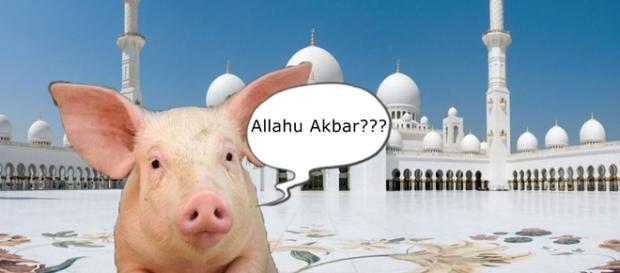 Pământul contaminat de porc nu-i sacru
