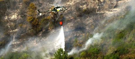 Incêndios têm destruído vasta área de floresta