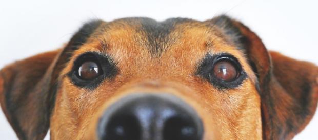 Lista psich nowotworów jest długa.