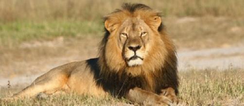 Jericó se habría encargado de la manada de Cecil