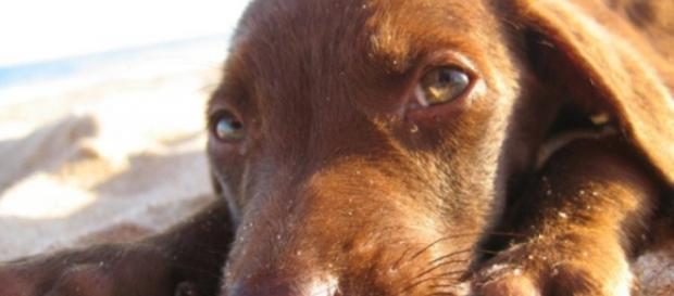 Seu cão está estressado? Que fazer?