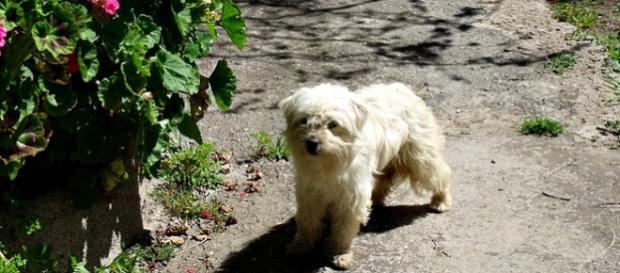 La perra de 10 años encontrada en Francia