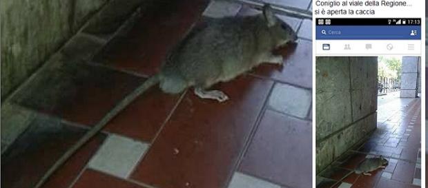 Caltanissetta, ratto visto in viale della Regione