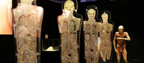 'Human Bodies'. Exposición en Oviedo hasta 25 nov