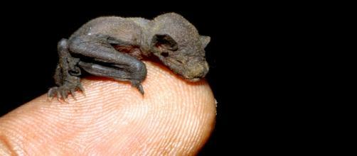 Il pipistrello può aiutarci contro le zanzare
