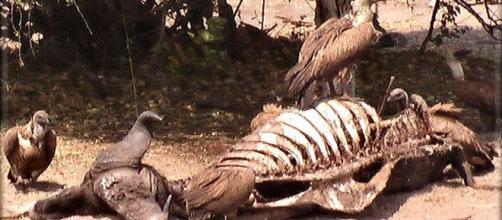 Il gruppo Insieme per Stella avvoltoi o colombe?