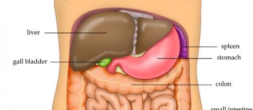 Un nuevo virus puede ser causa de cáncer de hígado