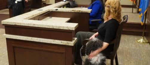 Perro dando apoyo durante un juicio penal