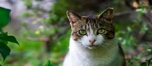 Los gatos influyen bien en niños con autismo