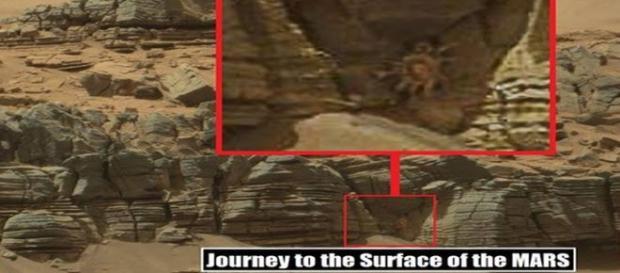 Granchio 'alieno' fotografato su Marte