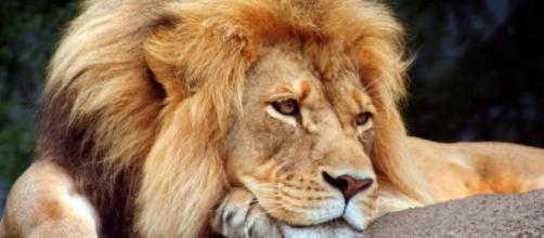 A Tristeza do Leão deveria ser a nossa Tristeza