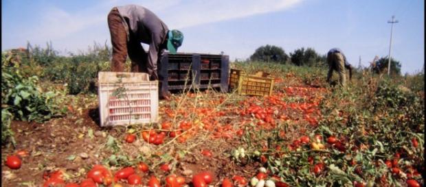 Vittime dello sfruttamento sul lavoro in Puglia