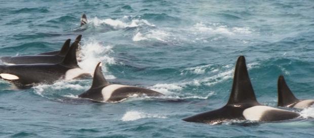 En 2006 una ballena se presentó en Londres