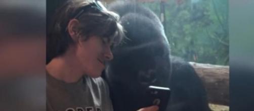 El vídeo del gorila más famoso de la red