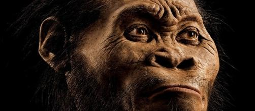 Ricostruzione dell'Homo Naledi
