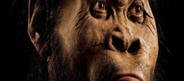 Homo Naledi, nuova specie umana