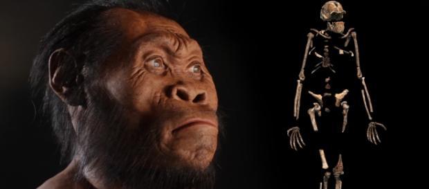 Ecco l'Homo Naledi, il nostro più vicino antenato