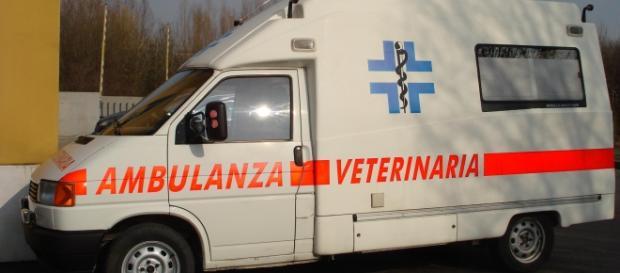 Pistoia: nasce l'ambulanza veterinaria.