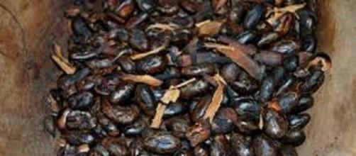 Dai semi di cacao l'elisir di lunga vita