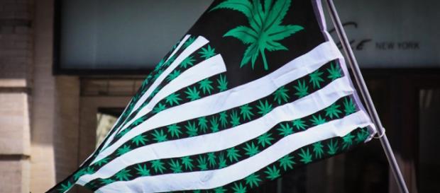 Flaga nowo powstałego Pierwszego Kościoła Cannabis