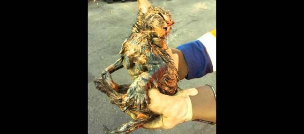 Gato rescatado antes de ser incinerado