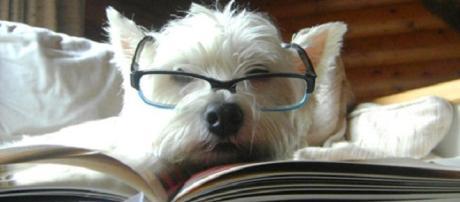 Dogalize: i cani diventano 'professori'