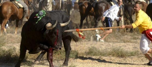 Fiesta del Toro de la Vega, Tordesillas