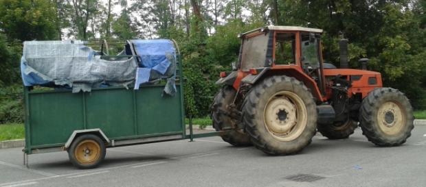 Trattore e rimorchio per il trasporto del bovino