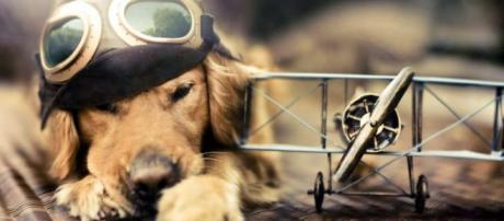 Dogalize: Atterraggio per salvare un cane
