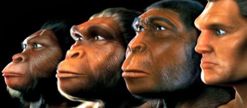 Cuatro etapas de la evolución humana