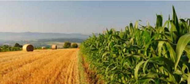 Foto di gaiacalabria.it sull'agricoltura.