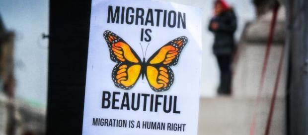 Motyl symbolem prawa do migracji